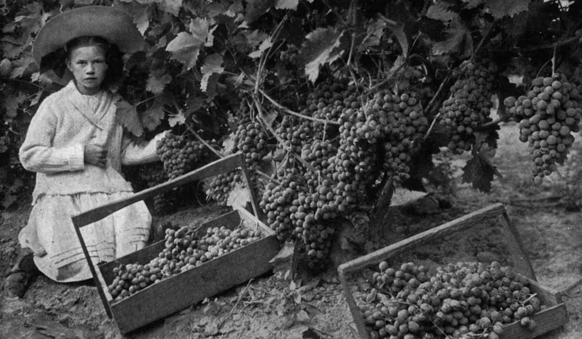 Cantinetta Antinori | Riccardo Giraudi | Tuscan Cuisine | Wine